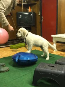 Balans en Coördinatie Pups